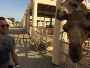 357 - The Royal Camel Farm