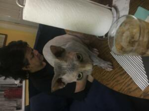 06245 - Hanging with Hairless cats in Sandusky OH